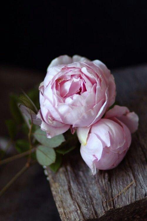 peonías rosas, ramos de novia, wedding planner Madrid