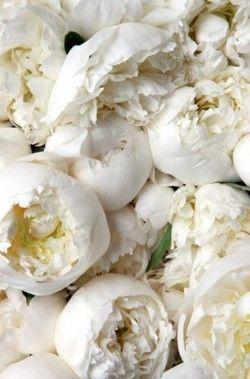peonías blancas, ramos de novia, wedding planner Madrid